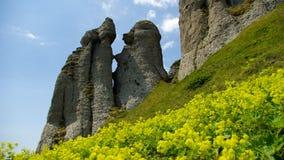 Berg und Wiesenlandschaft mit gelben Wildflowers Stockfotografie