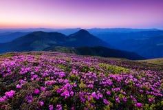 Berg under blommablomningen och soluppgång royaltyfri fotografi