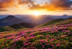 Berg under blommablomningen och soluppgång royaltyfri bild