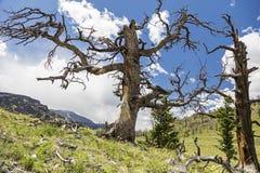 Berg van de winkelhaak de dode boom toneel Stock Afbeeldingen