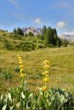 Berg van deze Alpen stock afbeelding