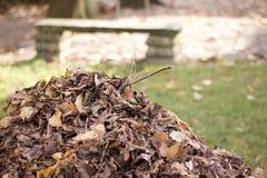 Berg van droge die bladeren in de herfst in een park worden gegroepeerd stock foto