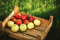 Berg von den Äpfeln, die auf der Holzkiste im grünen Gras im Garten stehen Sommerfarbbild Kreis helles bokeh Fünf Rot appl Lizenzfreie Stockfotos