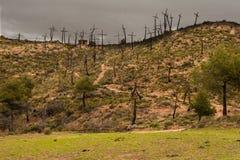 Berg von Trauer durch das Feuer seiner Bäume stockfotos