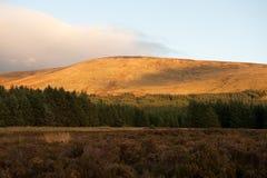 berg wicklow Royaltyfri Bild