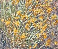 Berg wildflower Royalty-vrije Stock Afbeeldingen