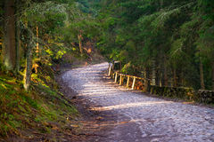 Berg windende rijweg in de lente naaldbos Stock Foto's