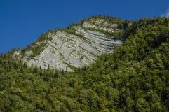 Bergabhang bedeckt mit Bäumen Stockbild