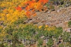 Bergabhang im Herbst Stockbilder
