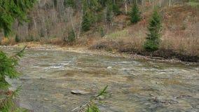 Bergachtige rivier Prut in het bos van Karpatische bergen stock videobeelden