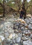 Bergachtige snelle rivier met duidelijk water in het bos in de bergen Dirfys op het Eiland Evvoia, Griekenland royalty-vrije stock fotografie