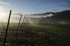 Bergamo vineyards Royalty Free Stock Photos
