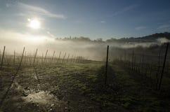 Bergamo, wijngaard Royalty-vrije Stock Foto's