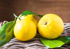 Bergamot citrus fruit from south Italy, Reggio Calabria. Fresh bergamot citrus fruits on rustic wooden background stock image