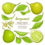 Bergamot elements set Stock Image