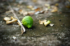 Bergamot fall from the tree. Down on the floor with leaves and branches stock images