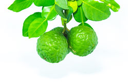 Bergamot. Fresh bergamot isolated on white background Royalty Free Stock Photo