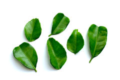 Bergamot. A fresh bergamot leaf in isolate stock image