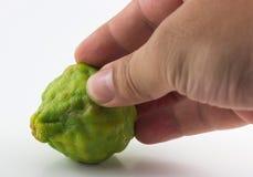 Bergamot fruit and hand isolated on white background.  Royalty Free Stock Image
