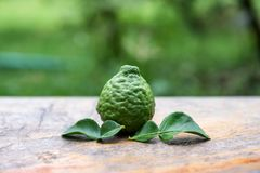 Bergamot fruit with leaf from garden on wood table. Bergamot fruit with leaf from garden on wooden table royalty free stock photo