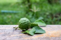 Bergamot fruit with leaf from garden on wood table. Bergamot fruit with leaf from garden on wooden table stock images