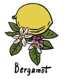 Bergamot fruit Stock Photo