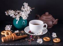Bergamot green tea. And blossom apricot on table stock photos