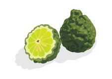 Bergamot. Kaffir lime or bergamot a fragrant fruit size of a lemon have been general used in Thai food, perfumes and cosmetics Stock Images