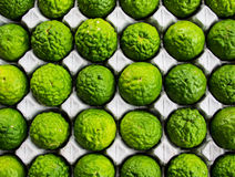 Bergamot (Kaffir Lime) fruit. Bergamot (Kaffir Lime) fruit on paper panel Stock Image