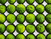 Bergamot (Kaffir Lime) fruit. Stock Image