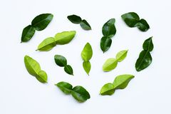 Bergamot kaffir lime leaves herb fresh ingredient isolated on white background. Top view stock photography