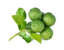 Bergamot and kaffir lime leaves Royalty Free Stock Photo
