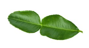 Bergamot leaf isolated on white background.  royalty free stock photos