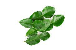 Bergamot leaf isolated on a white background. royalty free stock photography