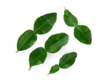 Bergamot leaf isolated on white background, top view. Flat lay stock photos