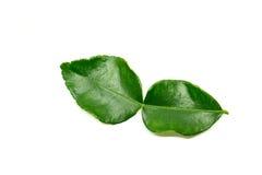Bergamot leaf  Stock Image