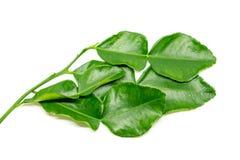 Bergamot leaf  Royalty Free Stock Photos