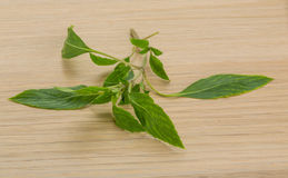 Bergamot leaves Royalty Free Stock Photo