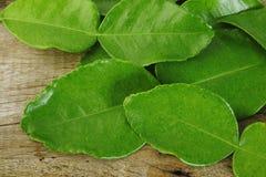 Bergamot leaves. On old wooden stock photography