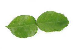 Bergamot leaves. On white background royalty free stock photography