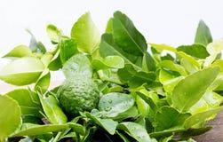 Bergamot leaves Stock Image