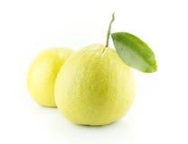 Bergamot oranges. On white background stock photo