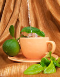 Bergamot tea Stock Images