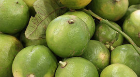 Bergamot a typical citrus of Mediterranean countries. Many ripe fruits of Bergamot a typical citrus of Mediterranean countries stock image