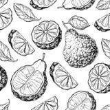 Bergamot vector seamless pattern drawing Royalty Free Stock Photo