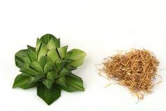 Bergamot wrapped in Pandanus Palm and Lotus pollen heart shape. Stock Photos