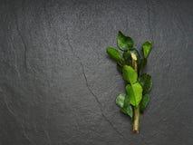 Bergamoten, kaffirlimefrukt och kaffiren kalkar bladet med filialen på mörk bakgrund Arkivfoton