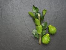 Bergamoten, kaffirlimefrukt och kaffiren kalkar bladet med filialen på mörk bakgrund Royaltyfria Foton