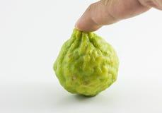 Bergamotfrukt och hand som isoleras på vit bakgrund Fotografering för Bildbyråer