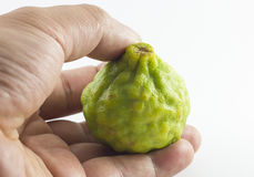 Bergamotfrukt och hand som isoleras på vit bakgrund Arkivbild